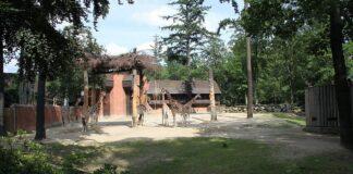 pavilon ziraf