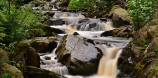 Prunerovsky potok