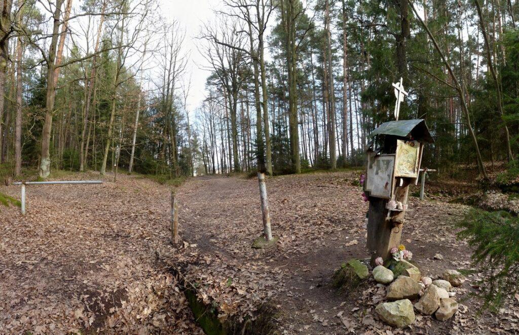 Branisovsky les