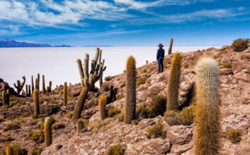 Kaktusy-Nevado-de-Incahuasi