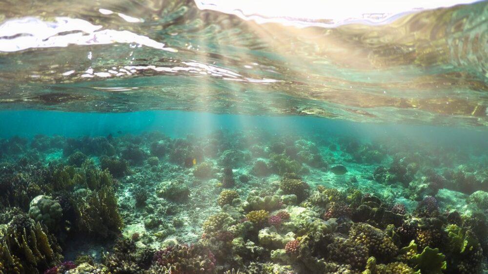 Korály v karibském moři