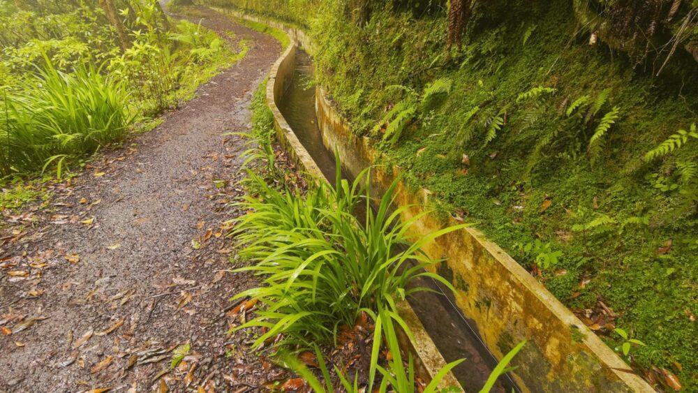Příroda na Madeiře