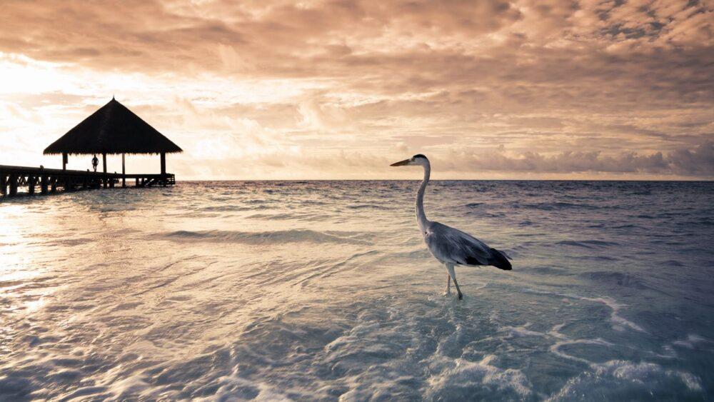 Pláž při západu slunce na Maledivách