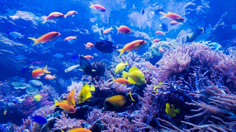 Podmořský svět Karibské moře