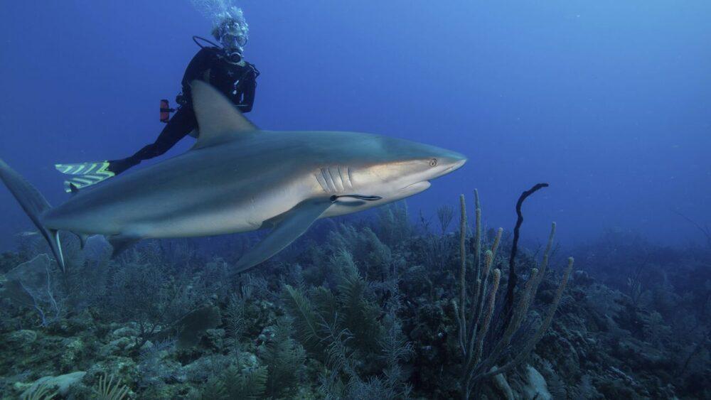 Potápěč v Karibském moři