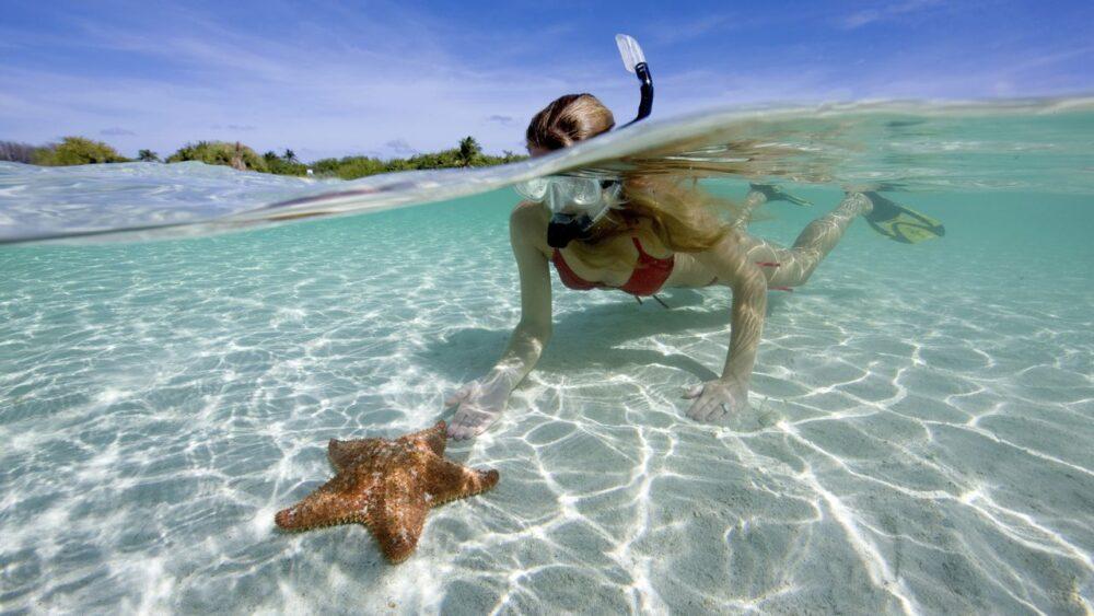 Potápění v Karibském moři mořská hvězdice