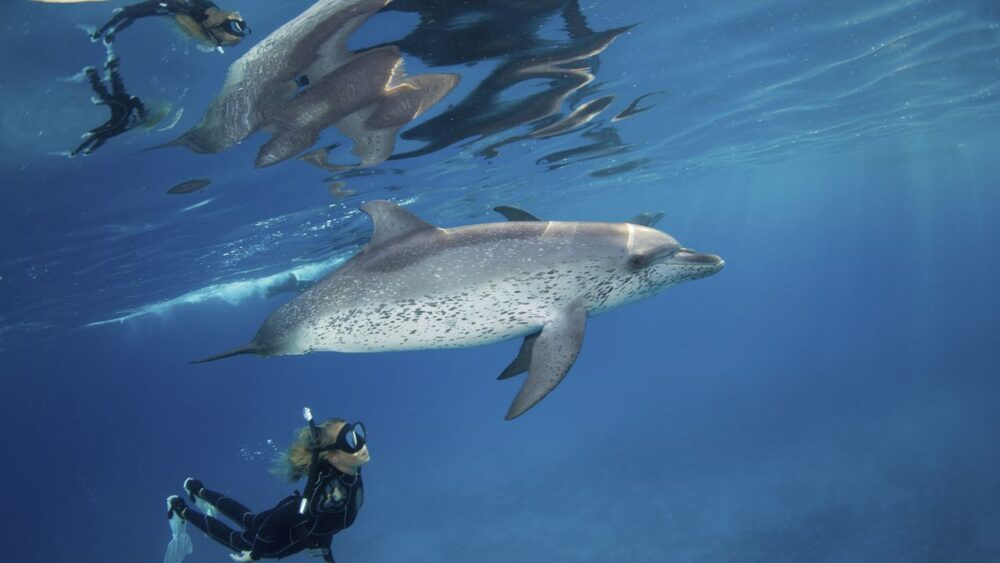 Potápění v Karibském moři