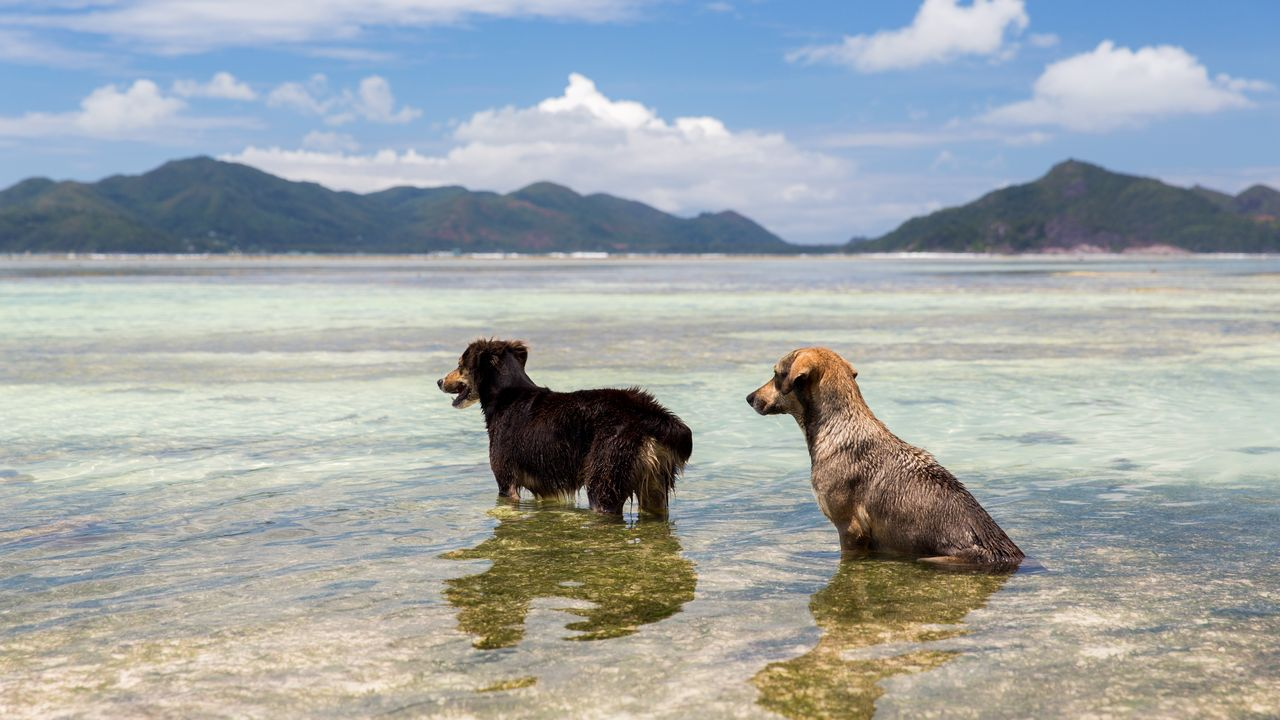 Psi na Seychelách