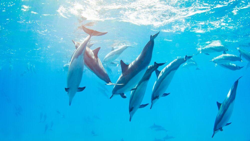 Delfíni pod hladinou
