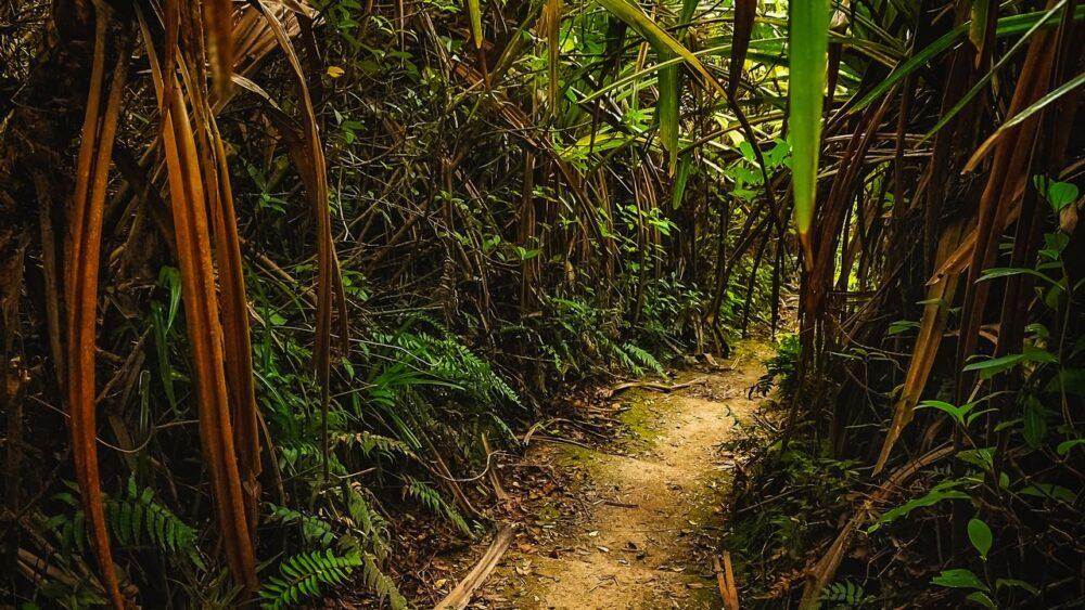 Džungle na Sumatře