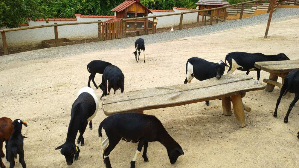 Kozy v zoo ústí nad labem