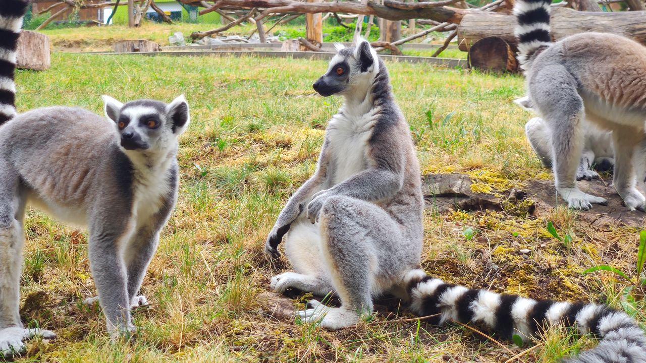 Lemur kata zoo ústí nad labem