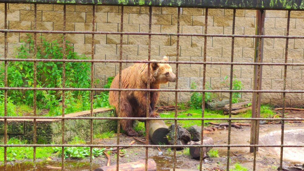 Medvěd v zoo dvorec