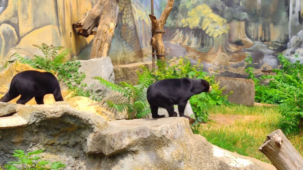 Medvědi v zoo ústí nad labem