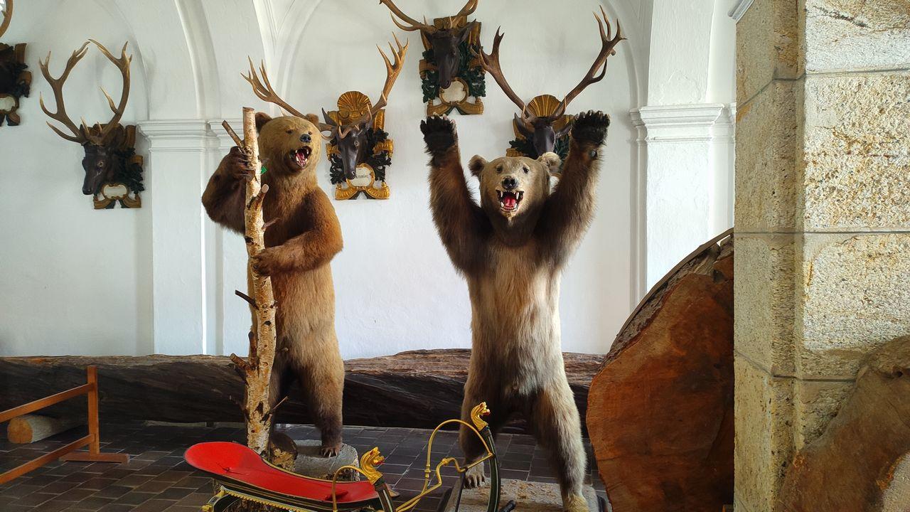 Medvedi - zámek hluboká