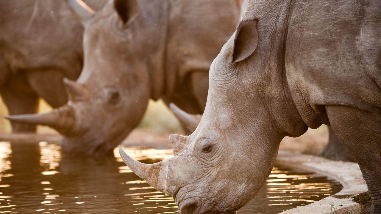 Nosorožec - Kruger park