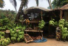 obchody-s-ovocem-v-dominikanske-republice
