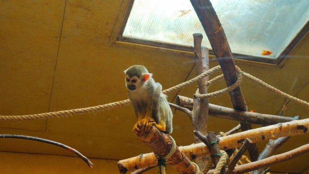 Opička v zoo ústí nad labem