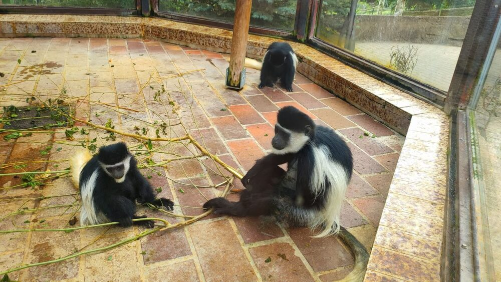 Opice v zoo