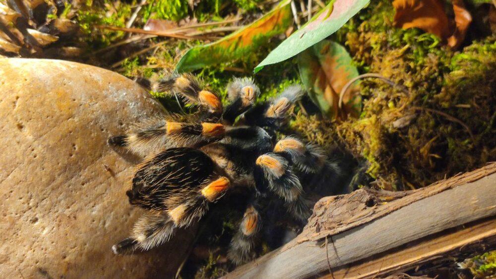 Pavouk v zoo ústí nad labem