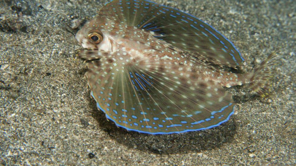 Podmořský svět karibik