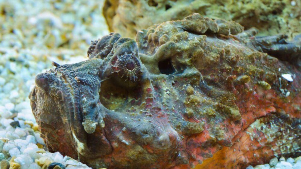 Podmořský svět - Rudé moře