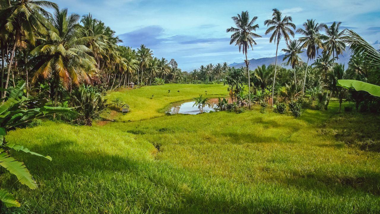 Příroda - Sumatra