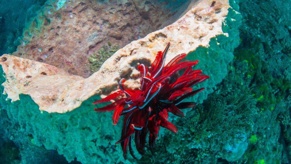 Korál na dně moře