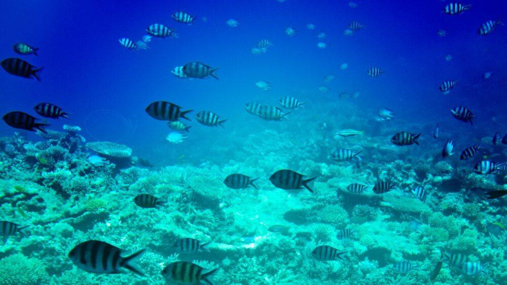 Rudé moře - ryby