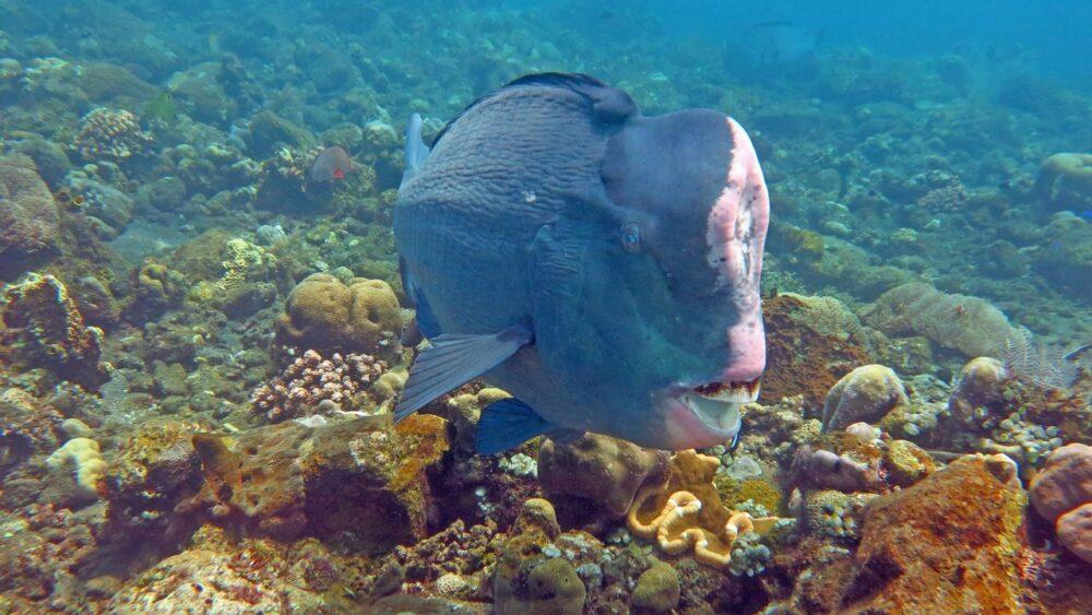 Podmořský svět - Bali