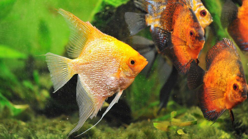 Rybičky v Rudém moři