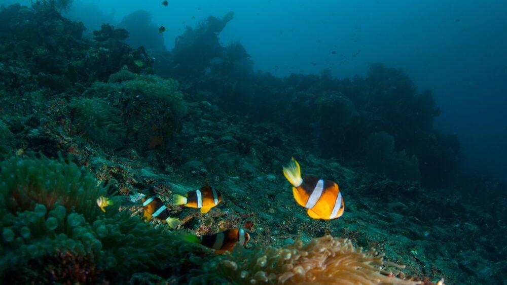 Dno moře - Bali