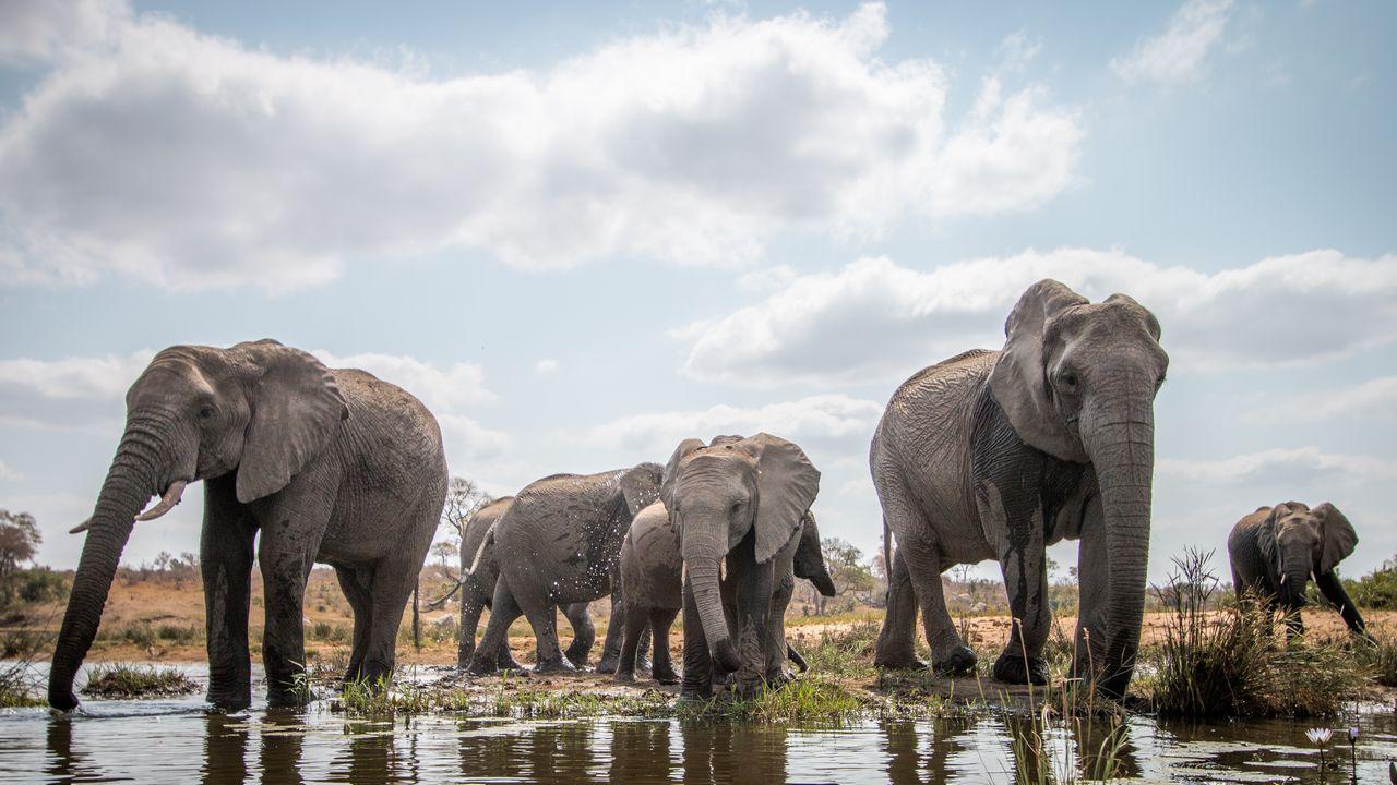 Sloni v Národním parku Kruger, Afrika