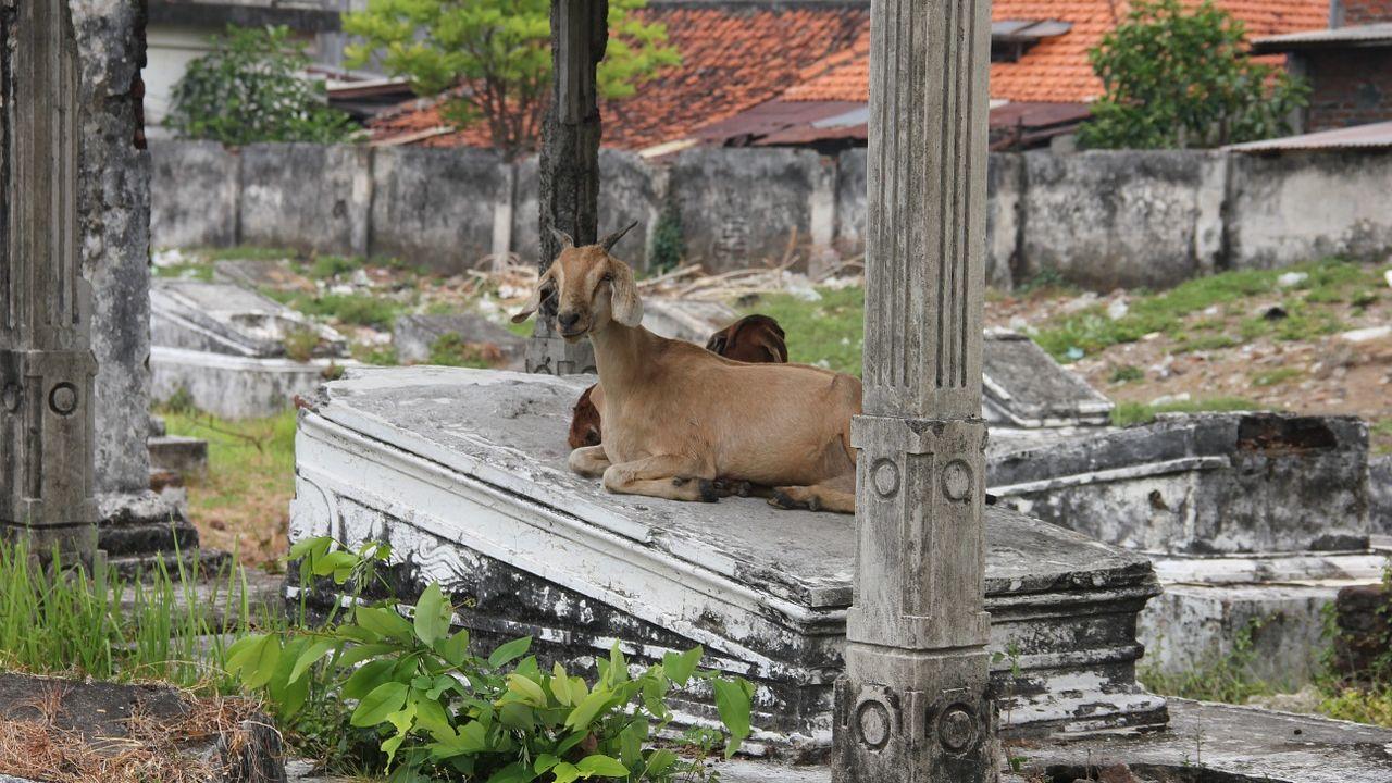 Surabaya město