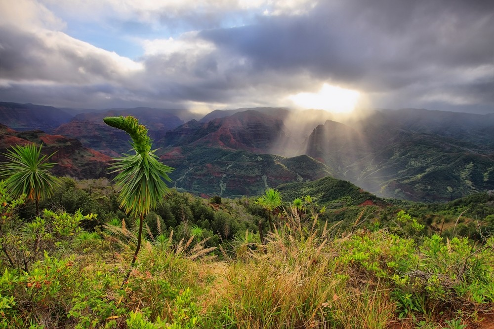 Waimea kaňon v Kauai
