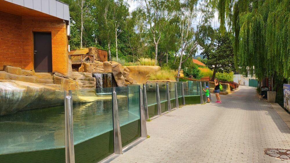 Zoo ústí nad labem - tučnáci