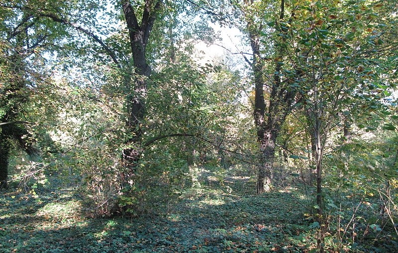 hrbitov bohnice