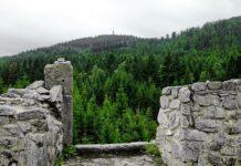 Krudum Slavkovsky les