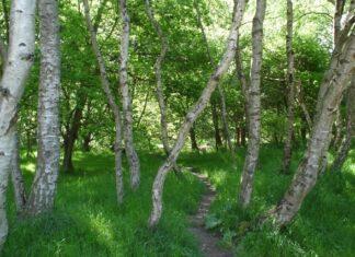 Sherwoodsky les