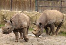 zoo dvur kralove