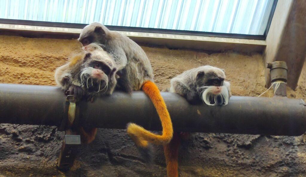 zoo opice