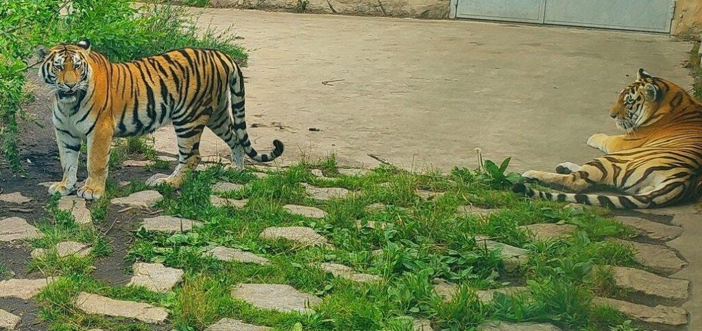 zoo selma