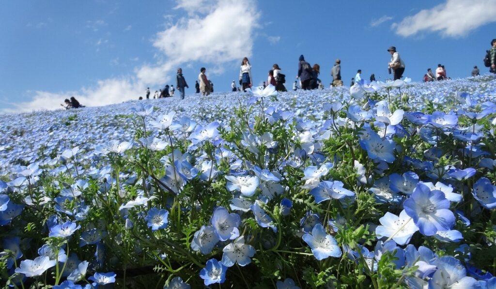 kvetiny v hitachi