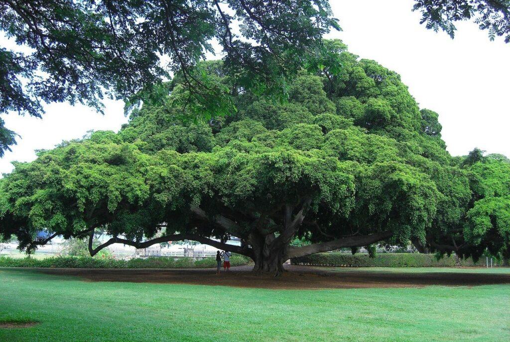 strom v hitachi
