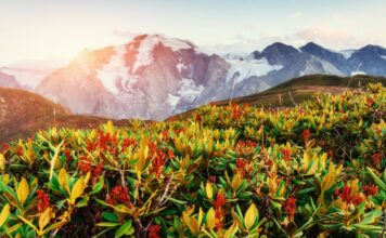 Louky-a-kvetiny-Kavkaz