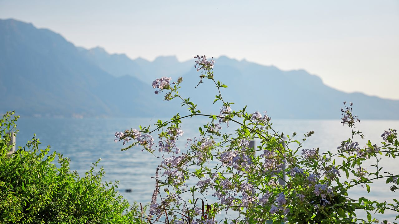 Priroda-u-zenevskeho-jezera