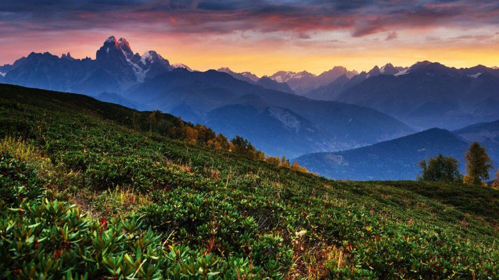Rododendrony-Kavkaz