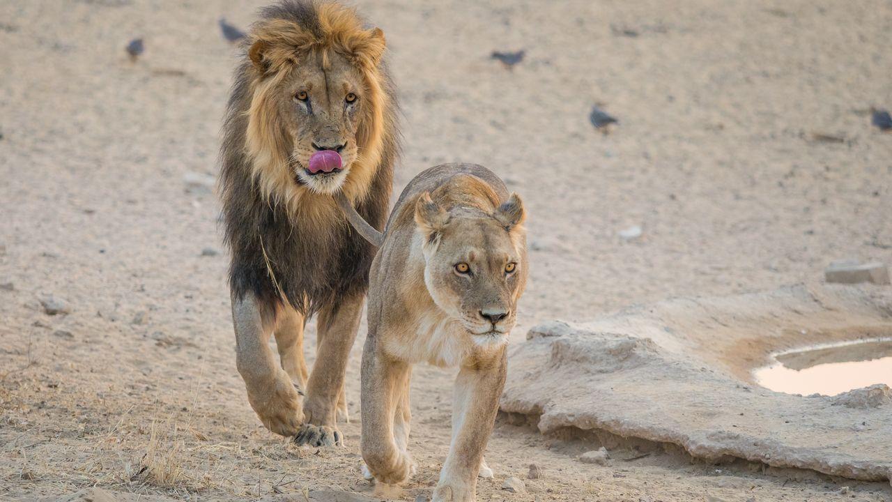 Lvi-rodinka