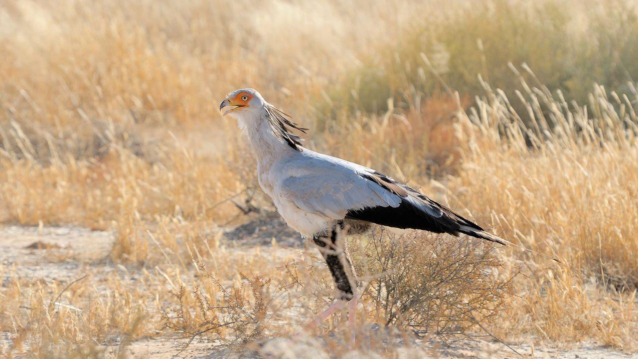 Ptactvo-kgalagadi