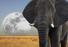 slon-etosha